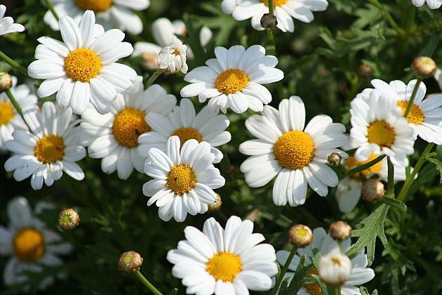 flower_1122008